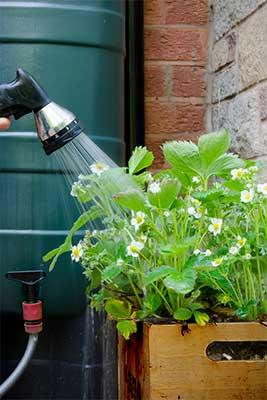 Récupérateur d'eau de pluie : arroser son jardin
